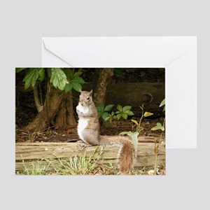 Calm Squirrel Greeting Card