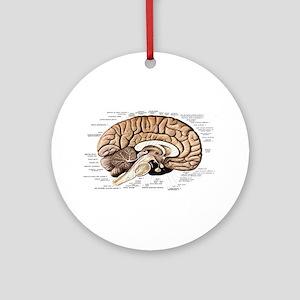 Human Brain Round Ornament