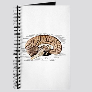 Human Brain Journal