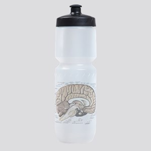 Human Brain Sports Bottle