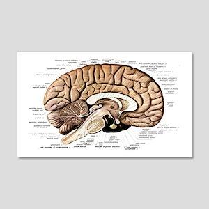 Human Brain 20x12 Wall Decal