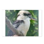 Kookaburra Postcards (Package of 8)
