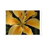 Flowers by God Photos by Davi Mini Poster Print