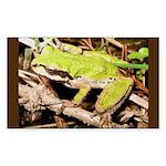 Pacific Treefrog Rectangle Sticker
