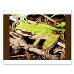Pacific Treefrog Small Poster