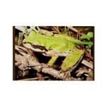 Pacific Treefrog Rectangle Magnet
