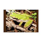 Pacific Treefrog Mini Poster Print