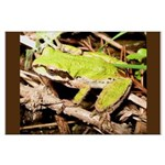 Pacific Treefrog Large Poster