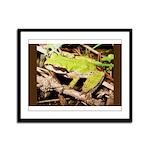 Pacific Treefrog Framed Panel Print