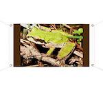 Pacific Treefrog Banner