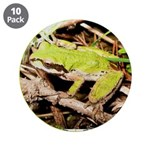 Pacific Treefrog 3.5