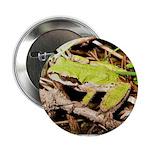 Pacific Treefrog 2.25