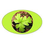 Poison Oak Oval Sticker