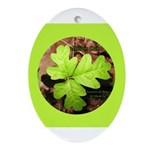 Poison Oak Oval Ornament