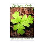 Poison Oak Mini Poster Print
