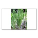 Horsetail Equisetum Rectangle Sticker