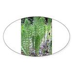 Horsetail Equisetum Oval Sticker