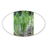 Horsetail Equisetum Oval Sticker (10 pk)