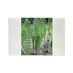 Horsetail Equisetum Rectangle Magnet (100 pack)