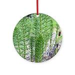 Horsetail Equisetum Ornament (Round)