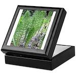 Horsetail Equisetum Keepsake Box