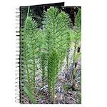 Horsetail Equisetum Journal