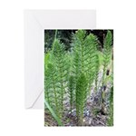 Horsetail Equisetum Greeting Cards (Pk of 10)