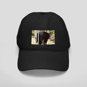 Black Bear Black Cap