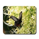 Butterfly 1 mousepad