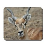 Deer 1 mousepad