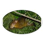 hyrax Oval Sticker (10 pk)