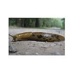 Banana Slug in Forest Rectangle Magnet (100 pack)