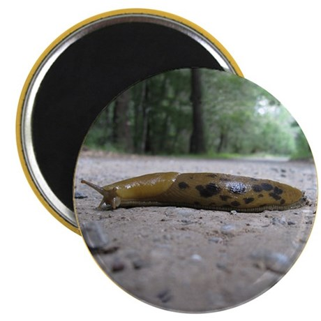 "Banana Slug in Forest 2.25"" Magnet (100 pack)"