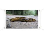 Banana Slug in Forest Banner