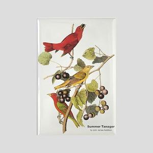 Audubon Summer Tanager Birds Rectangle Magnet