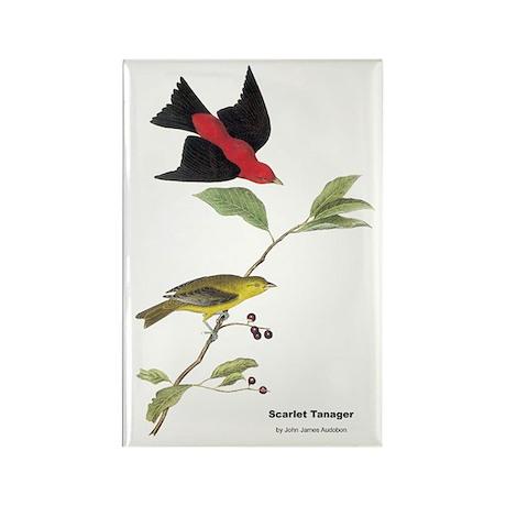 Audubon Scarlet Tanager Birds Rectangle Magnet (10
