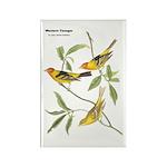 Audubon Western Tanager Birds Rectangle Magnet (10