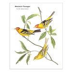 Audubon Western Tanager Birds Small Poster