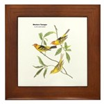 Audubon Western Tanager Birds Framed Tile