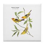Audubon Western Tanager Birds Tile Coaster