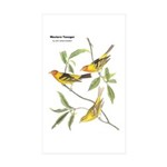 Audubon Western Tanager Birds Rectangle Sticker 1