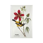 Audubon Troupial Birds Rectangle Magnet (10 pack)