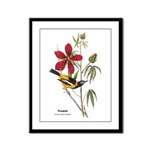 Audubon Troupial Birds Framed Panel Print