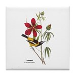 Audubon Troupial Birds Tile Coaster