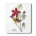 Audubon Troupial Birds Mousepad