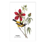 Audubon Troupial Birds Postcards (Package of 8)
