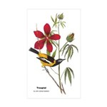 Audubon Troupial Birds Rectangle Sticker 10 pk)