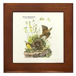 Audubon Eastern Meadowlark Birds Framed Tile