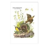 Audubon Eastern Meadowlark Birds Postcards (Packag