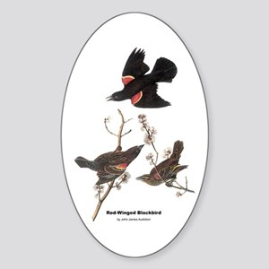 Audubon Red-Winged Blackbird Oval Sticker